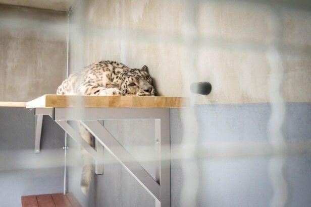 Nowy lokator zoo Urząd Miasta