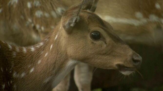 Zoo w Indonezji rozważa uśmiercanie zwierząt. Żeby inne nie głodowały