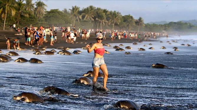 Selfie z ciężarnymi żółwiami. Dantejskie sceny na kostarykańskiej plaży