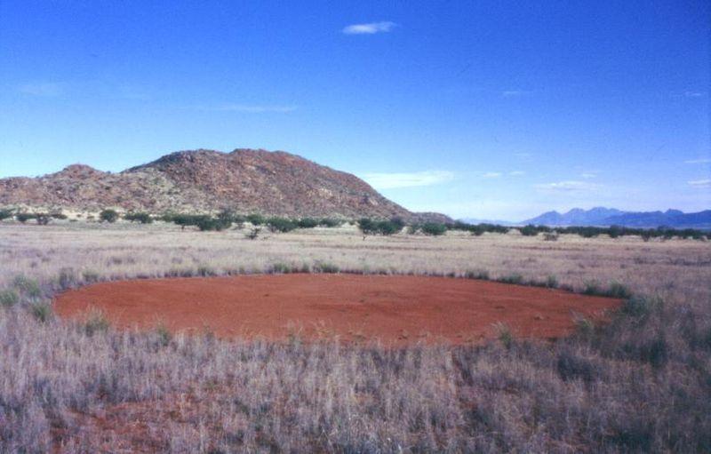 """Jeden z namibijskich """"czarcich kręgów"""""""