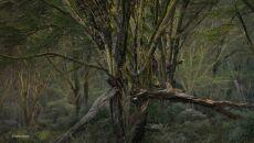 """The enchanted woodland"" David Lloyd, Nowa Zelandia/Wielka Brytania"