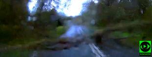 Drzewo runęło tuż za samochodem Reportera 24