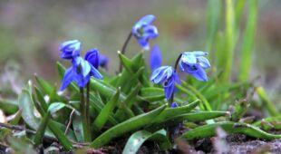 W oczekiwaniu na prawdziwą wiosnę (Kontakt 24)